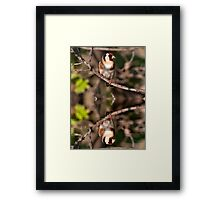 Goldfinch and Reflection Framed Print