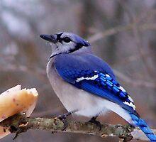 Bluebird Bagel by Sharksladie