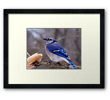 Bluebird Bagel Framed Print