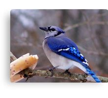 Bluebird Bagel Canvas Print