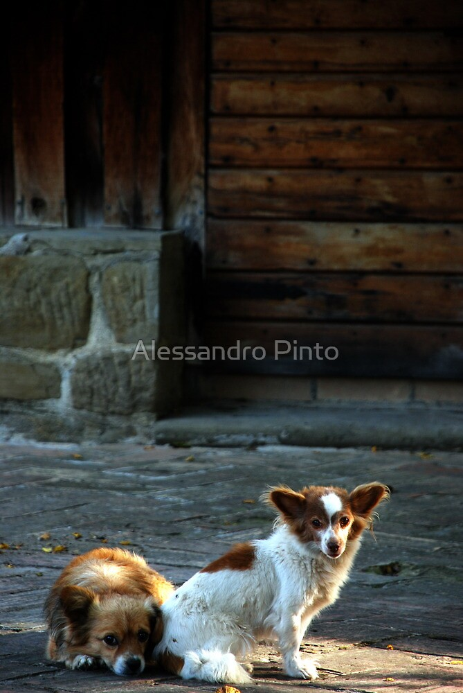 Pippo & Musci ( Pratale #3 ) by Alessandro Pinto
