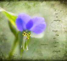 Wild Spiderwort by JulieLegg