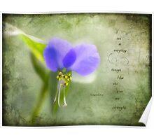Wild Spiderwort Poster