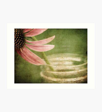 Coneflower Jar Art Print