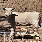 What's the matter, don't You LIke Onions? by Barb Miller