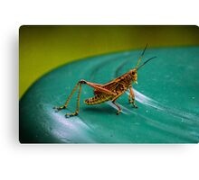 Grasshopper Relaxin Canvas Print