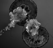 Thunderstorm Jellies by InvictusPhotog