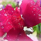 Bejewelled Snapdragon by EdsMum