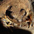 toad by sallysphotos