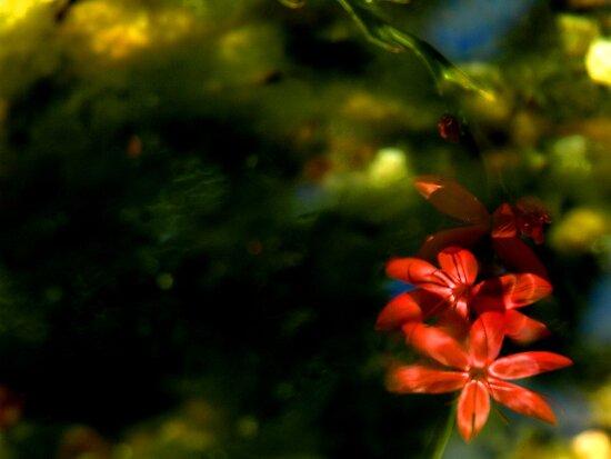 Flower reflection by heinrich