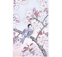JAPANESE ART - Bird on Sakura Photographic Print