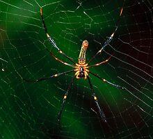 Spider. by trevorb