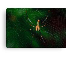 Spider. Canvas Print