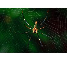 Spider. Photographic Print