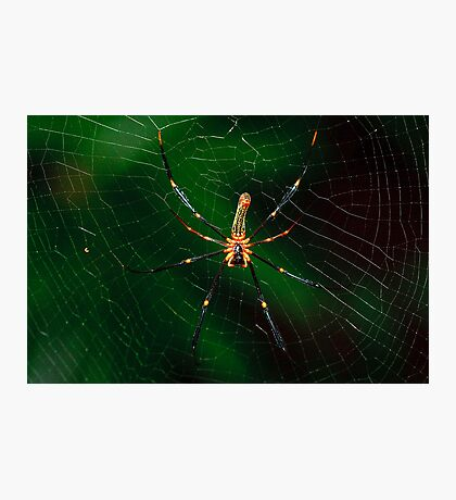 Spider. Photographic Print