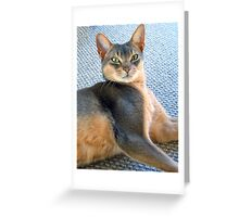 Generic Abyssinian Blue Male Cat  Greeting Card