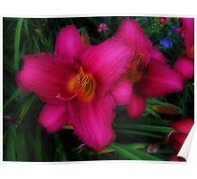 Daylilies Poster