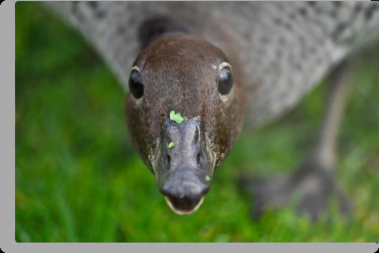 quack away now by paul erwin