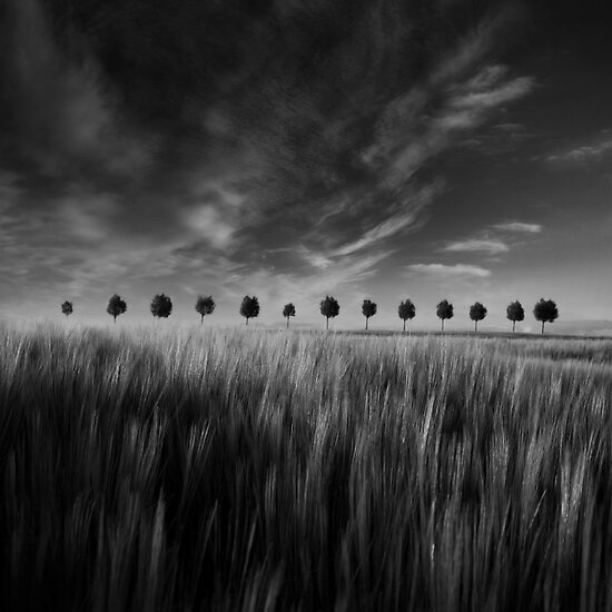 Family by Suzana Ristic