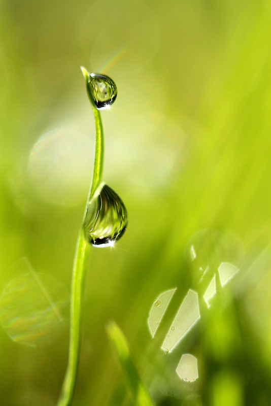 Drops of Late Summer by Sharon Johnstone