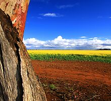 Colours Of Australia by Stephen Ruane