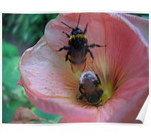 Bee Couple. Poster