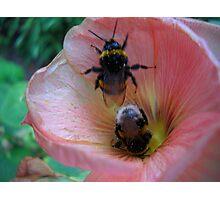 Bee Couple. Photographic Print