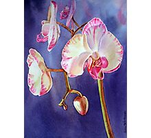 Gorgeous Orchid Photographic Print