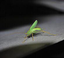 Oak bush Cricket 2 by relayer51