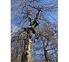Bare Tree in WInter Photographic Print