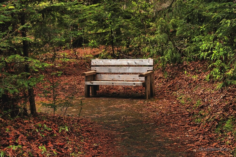 Lynn's Bench by doubleheader
