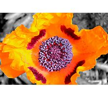 Burst of Color Photographic Print