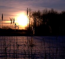 Dawn Through the Reeds by Kim McClain Gregal