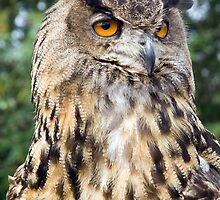 European Eagle Owl by Lizzylocket