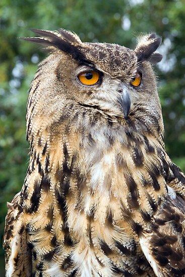 European Eagle Owl by Lizzylocket