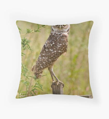 Wild Owl in Cape Coral, Florida Throw Pillow