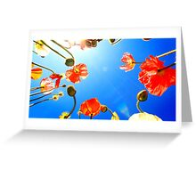 Poppie Delight Greeting Card