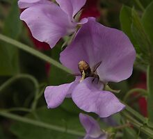 Sweet Pea & Bee by John Honeyman