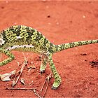 """TRAP SUUTJIES""!....(Verkleurmannetjie)FLAP-NECK CAMELEON  – Chameleon dilepts by Magaret Meintjes"