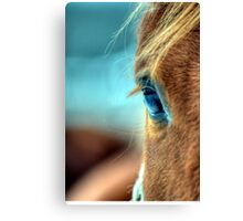 Horse Eye Canvas Print