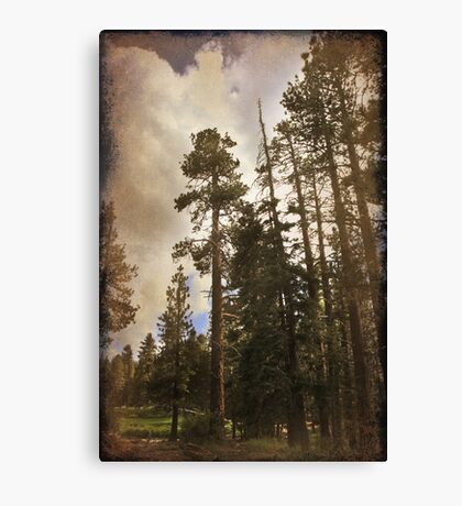 From Desert to Forest Canvas Print