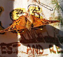 Butterfly by Savannah Gibbs