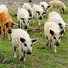 Ten little pigs went to market by Alan Mattison