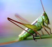 Grasshopper by aureecejustin