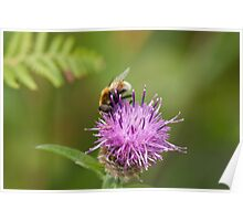 Eristalis intricarius hoverfly Poster