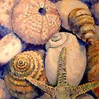 Sea Shells by Tania Richard