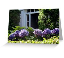 PURPLE HYDRANGEAS GREET VISITORS Greeting Card