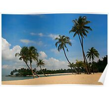 A Palm Covered Beach Poster