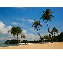 A Palm Covered Beach Photographic Print