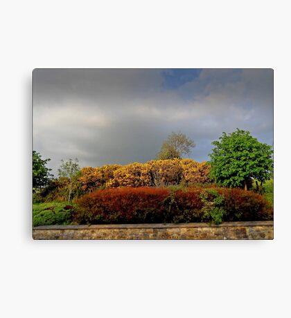 Autumnal Hedgerow Canvas Print